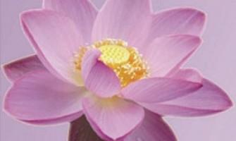 Curso de Magnified Healing, dias 28 e 29 de julho, no Luminaris