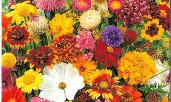 Casa Alquimia celebra a Primavera no dia 22 de setembro com ritual à Deusa da Fertilidade e Danças da Paz Universal