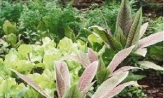 Curso de Cultivo Ecológico de Hortas e Jardins em Pequenos Espaços, dia 09/12