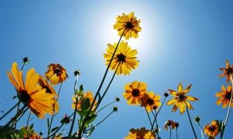 Salve 2013! Que neste novo ciclo sejamos quem somos em essência! LIVRES!