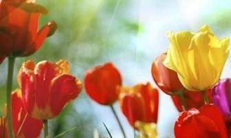 O Sol entra em Libra. Início de Primavera!