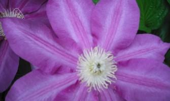 Curso de Formação Practitioner nas Essências Florais da California (Flower Essence Society)