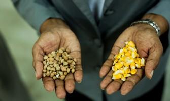 PE Agroecológico lança site reunindo diversas informações úteis para os consumidores