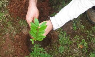 Campanha Plante uma Árvore realiza plantios na Serra da Gandarela (MG)