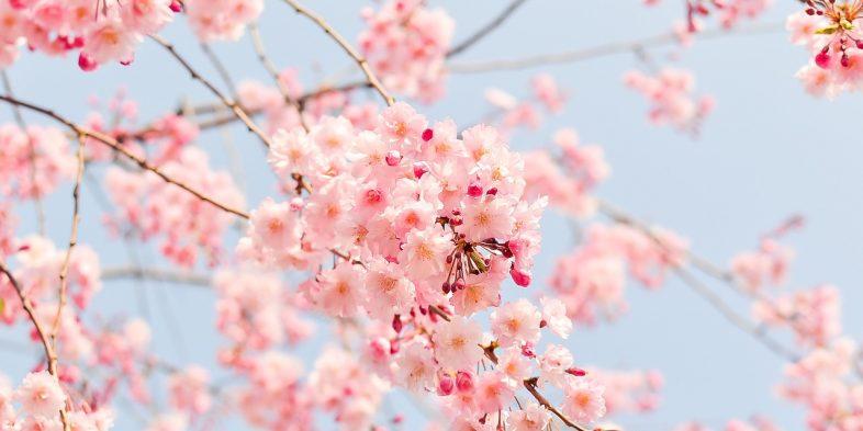 Ritual de beleza: SPA de Primavera