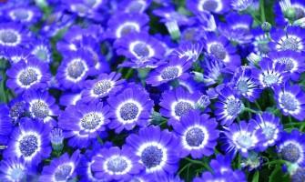 Inauguração da Sala Azul no Lapis Lazuli neste sábado