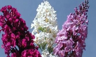 [AGENDA PE] A terapeuta Scheila Gomes oferece atendimentos socializantes de Terapia Floral