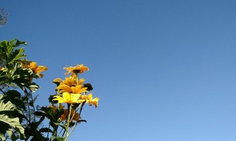[AGENDA PE] Gerar e Flores no Ar comemoram aniversário dia 8/10 com ritual de música e dança