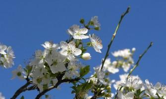 O Sol entra em Libra. Equinócio de Primavera!!!