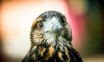 [AGENDA PE] Educação ambiental com animais silvestres e oficina de culinária dia 5/11 na Feira Agroecológica de Setúbal