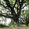 Oração de Libertação – Gratidão, Inclusão e Luz aos Ancestrais e a todo o sistema familiar