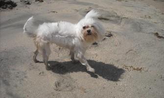 A dor de viver sem a presença da nossa cachorrinha Rubi