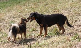 [AGENDA PE] Feira de adoção de cães, neste sábado, no Parque Santana