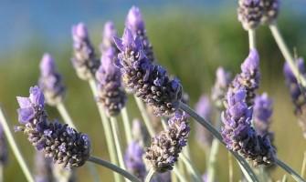 [AGENDA PE] Curso de Introdução em Aromaterapia dias 6 e 7 de maio no Espaço Gerar