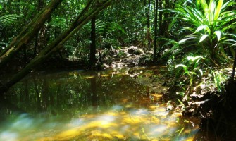 [AGENDA PE] Bosque das Artes – 1ª Mostra Cultural/Terapêutica Bosque das Samambaias, acontece nos dias 14, 15 e 16 de abril