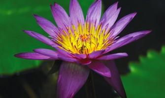 [AGENDA PE] Iniciação em Deeksha – Retiro Despertar da Consciência, dias 5, 6 e 7 de maio