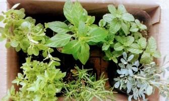 [AGENDA PE] Oficina 'Plantio de hortaliças, temperos e flores para crianças' dia 4/6/17