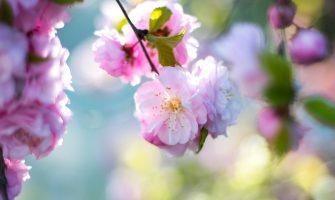 [AGENDA PE] Psicoterapia Reencarnacionista, Regressão, Reiki, Florais e Magnified Healing na 'Quinta Solidária', em Boa Viagem