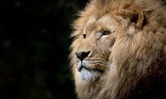 [MALLIKA FITTIPALDI]  O Leão, a Savana e Eu