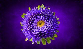 [AGENDA PE] Curso de Reiki da Chama Violeta dia 18/11 no Espaço Horizonte