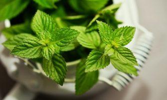 Curso online gratuito sobre Plantas Medicinais e Fitoterápicos