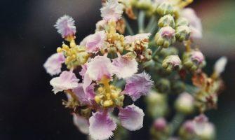 [AGENDA PE] 'Florais da Amazônia – Curso Introdutório de Elementoterapia', dias 7 e 8 de abril, em Olinda