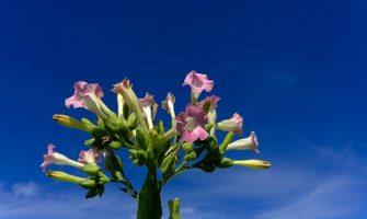 [AGENDA PE] Curso 'Os Florais da Amazônia e Os Sete Pontos de Força', dias 22 e 23/9, com Maria Alice