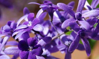 [AGENDA PE] Formação no Sistema Floral de Saint Germain tem início no dia 16/5 no Recife