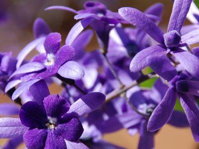 [AGENDA PE] Formação no Sistema Floral de Saint Germain tem início no dia 18/4 no Recife