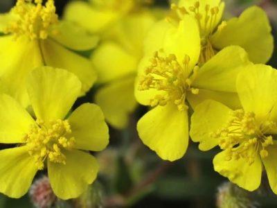 [AGENDA PE] Espaço Gerar oferece Atendimento Floral Solidário, durante a quarentena