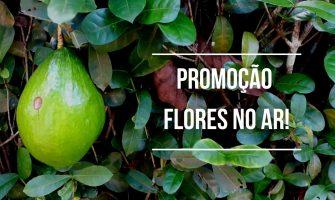 Portal Flores no Ar oferece descontos em divulgações no mês de abril