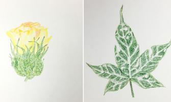 Está no ar o Caderno Ilustrado de Plantas e Ervas Medicinais, das mulheres da Zona da Mata Norte/PE